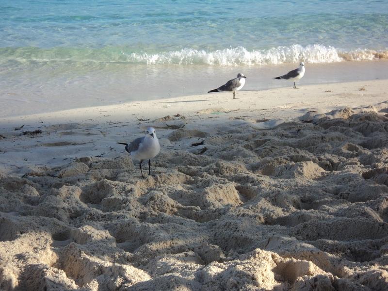 Forum di monte argentario punto it my holidays - Bagno coi delfini ...